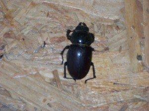insectes 100_2390-300x225